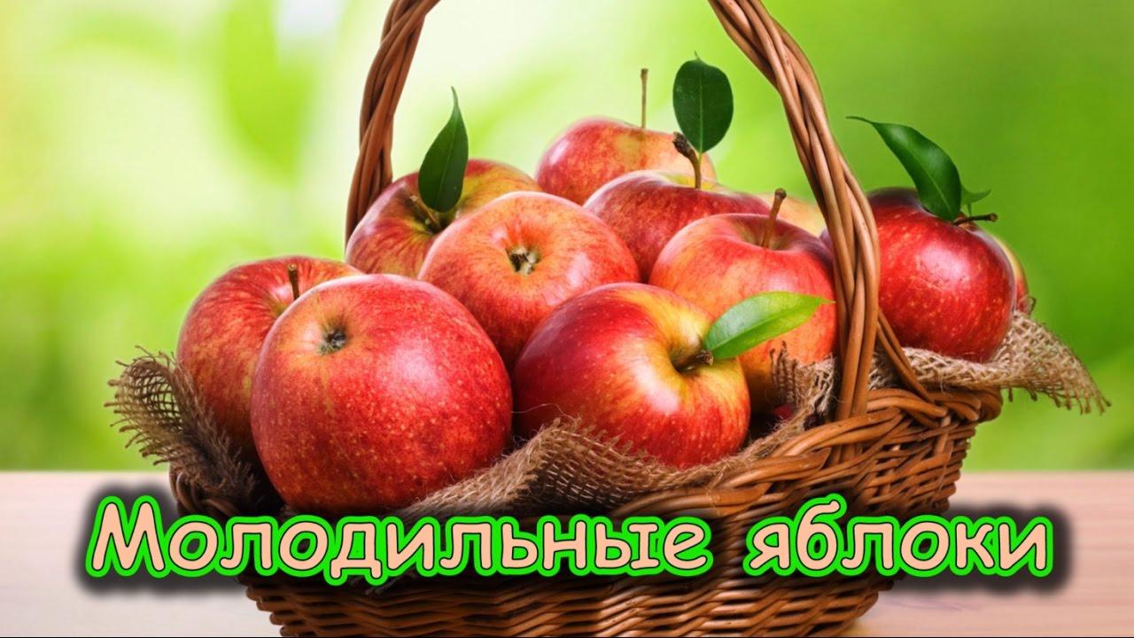 фото яблоки молодильные
