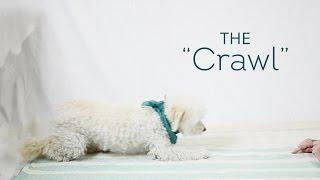 Dog Tricks Made Easy - The