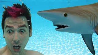 Shark In Swimming Pool Surprise!