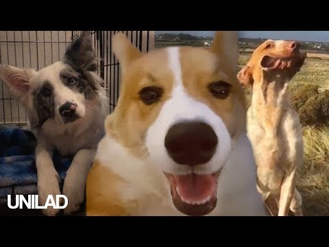 Dogs Are Awesome - Funny Dog Compilation! | UNILAD