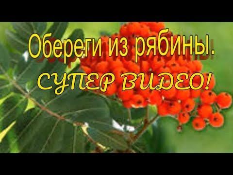 Листья рябины фото -