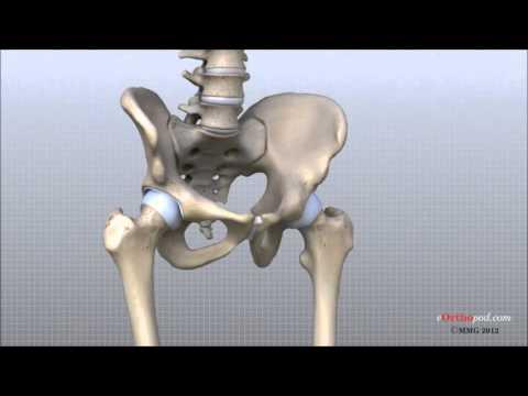 Anatomía de la articulación de la cadera. - YouTube