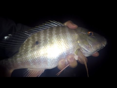 CUTBAIT Fishing for SNAPPERS and GRUNTS (Lauderdale-by-the-Sea, FL)