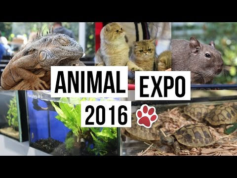 VLOG│ANIMAL EXPO 2016