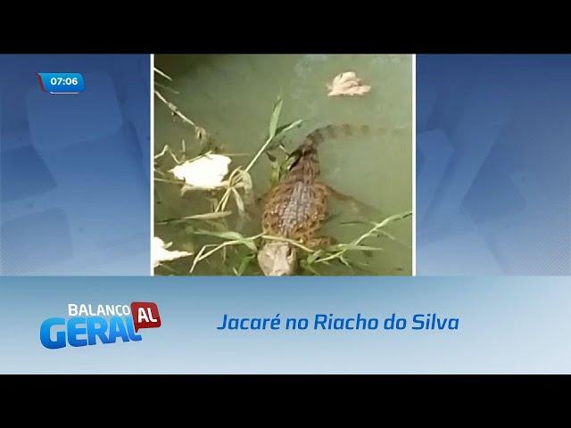 Moradores de Bebedouro flagram jacaré no Riacho do Silva