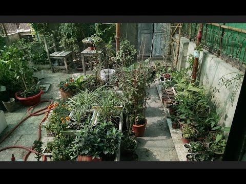 Kitchen Garden Overview | Garden in Home Ideas| May-2017 | Gardening Sekho