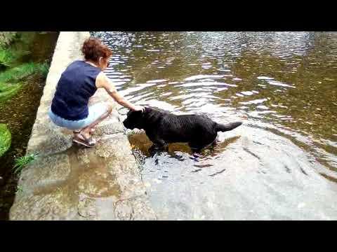 Cão brincalhão em Estorãos