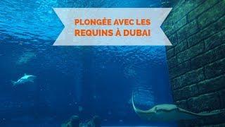 Plongée avec les requins à Dubai