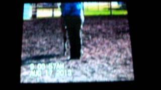 Video Itsfiveoclocksomwhere 2013 APHA colt download MP3, 3GP, MP4, WEBM, AVI, FLV September 2018