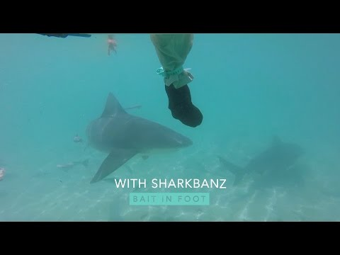 Shark Repellent Bands Versus Bull Sharks