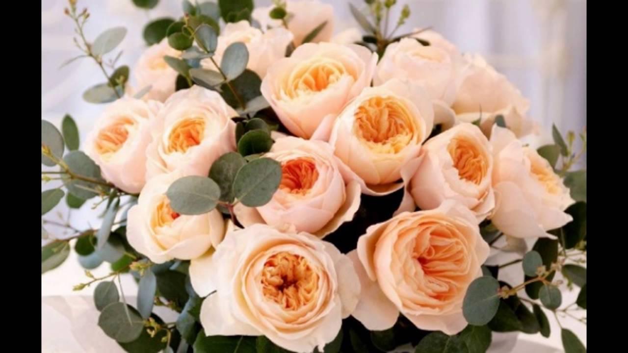 Bunga Mawar Terindah Di Dunia Youtube