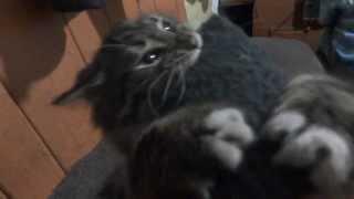 кот ненавидит рукавицы