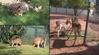 تخيل: رياض سفاري، تجارب حية مع حيوانات برية وأليفة ومفترسة  لأول مرة في المملكة ضمن موسم الرياض