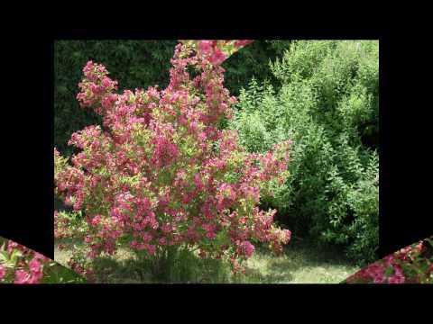 Biesiadne- Kwiaty Kocham I Ciebie