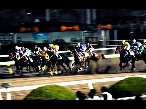 Horseracing in Japan - Tokyo City Keiba ᴴᴰ ● 大井競馬場