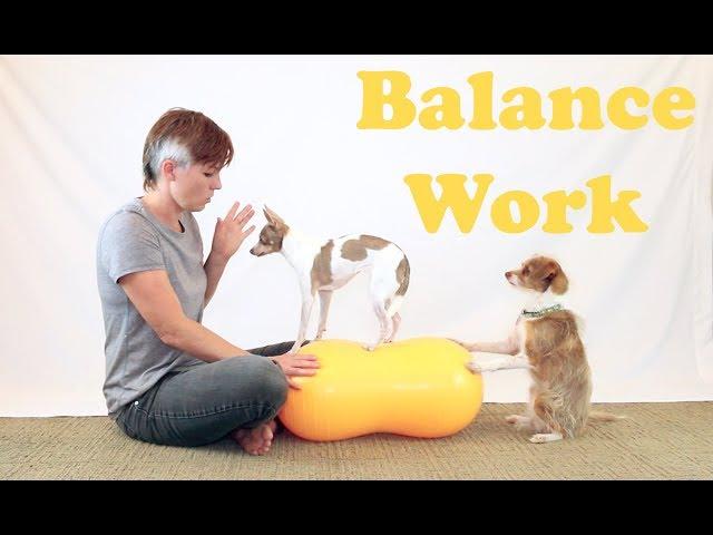 Working on Balance Work - Dog Training