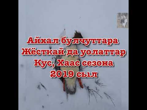 Сезон охоты на гуся и уток 2019