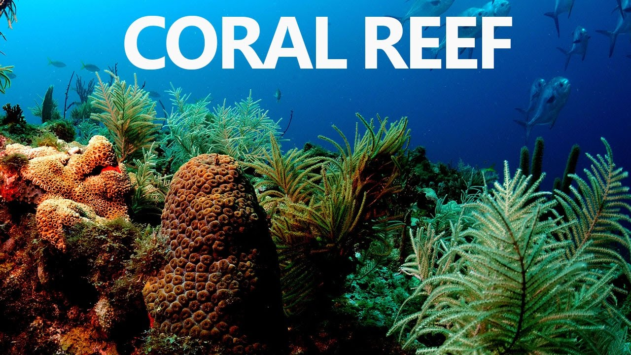 an overview of the coral reefs Outline ¾what are mangroves and seagrass ¾importance of mangroves ¾importance of seagrass ¾symbiotic relationship of mangroves, seagrass and coral reefs.