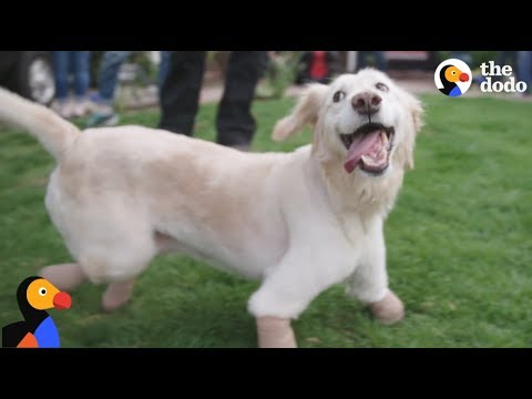 Dog Found in Trash Bag Finds The PERFECT Family  | The Dodo: Comeback Kids S01E01