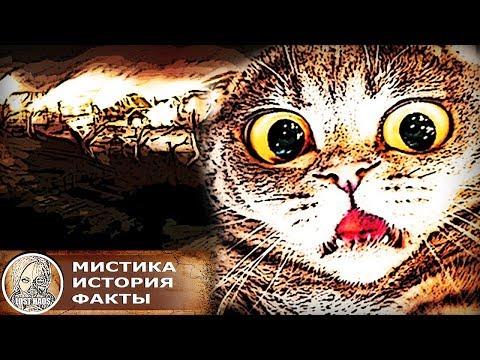 Как относились к кошкам в мрачном Средневековье  и Древнем Египте. Интересные факты
