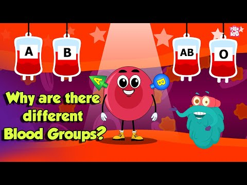 Types Of BLOOD GROUPS | Why Are There Different Blood Groups? | Dr Binocs Show | Peekaboo Kidz