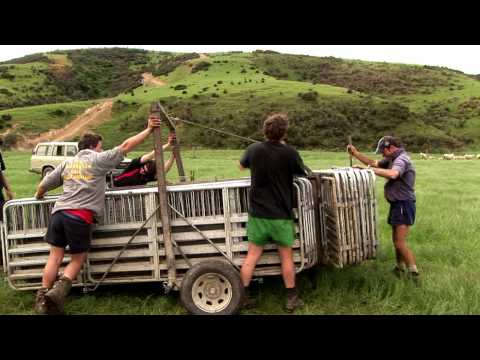 Sheep Station NZ - the tailing Crew