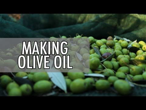 How to Make Olive Oil - Olive Oil Makers in Italy | Walks of Italy