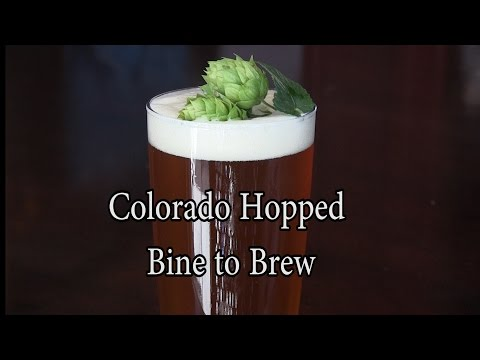 Colorado Hopped - Bine to Brew