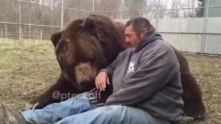 Шок медведь спит на человеке