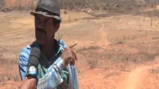 Pereiro: a Seca que o Governo não vê na Comunidade de Picada