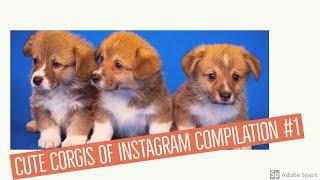 Good Corgi Instagram Accounts