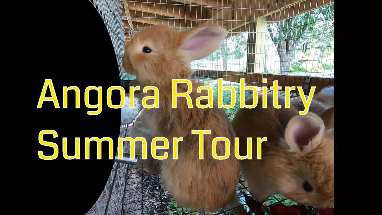 Summer angora rabbitry video tour.