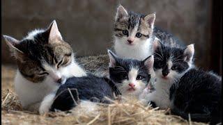 トルコ 子猫殺し食べた日本人に罰金 国外退去に関して