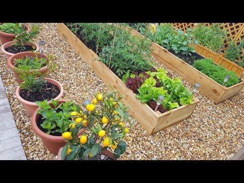 My backyard vegetable garden tour June 2020 ~ What is growing in my small backyard vegetable garden?