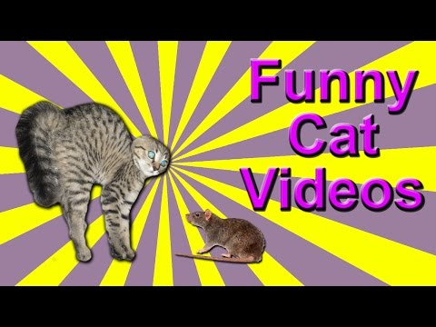 Funny Cat Videos – Rat Chases Cat, Santa Cat, Twerking Cat