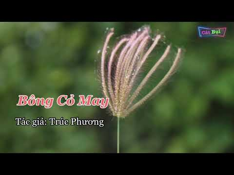 BÔNG CỎ MAY karaoke SONG CA