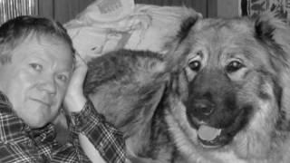Кавказкая овчарка, собаки владельцев п-ка Домбай-Ульген Сулахат и Машук