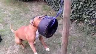 Slim boefje .... smart little dog ....