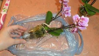 Мини орхидея mini orchid(1 Мини орхидея mini orchid получила вот такую бедняжку... пришлось пересаживать... после чего отправлю на просушу..., 2014-07-08T17:19:19.000Z)