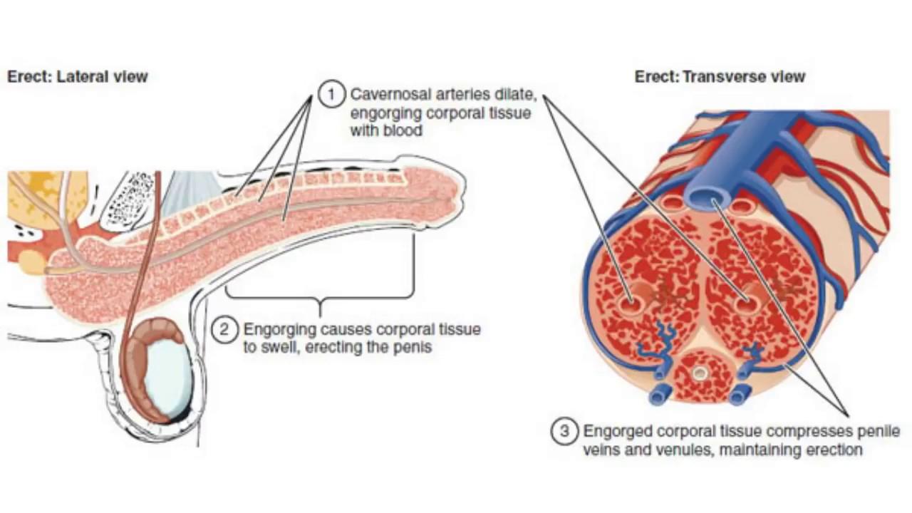 Ingrijirea organelor genitale ale copilului