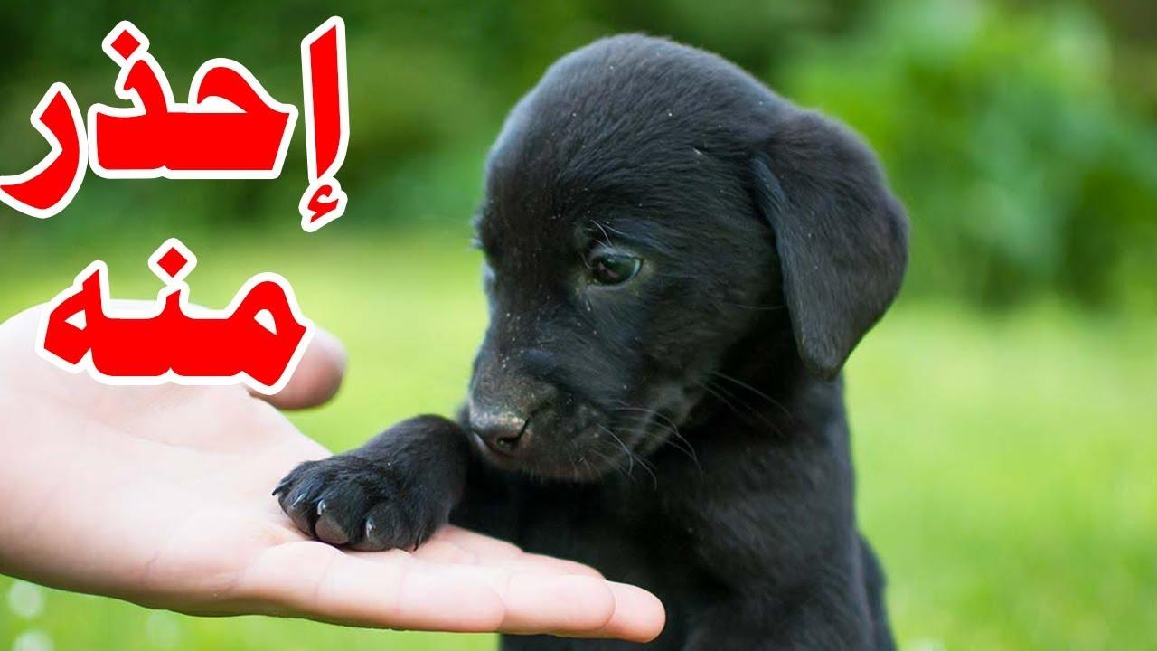 تفسير رؤية الكلب الأسود في المنام لابن سيرين موقع محتوى