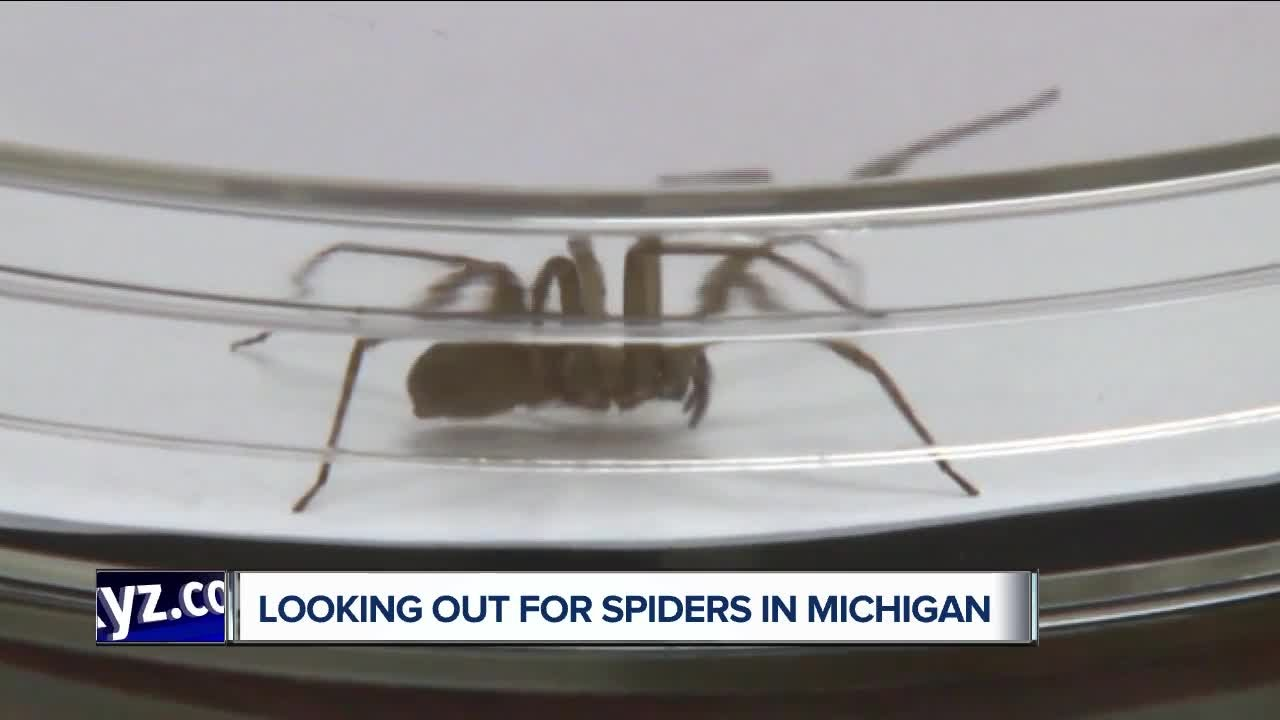Looking out for spiders in michigan youtube for How to keep spiders out of your bedroom
