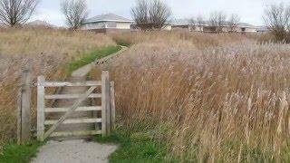 Landal Esonstad - Bungalowpark Anjum - Friesland (en omgeving Lauwersmeer)