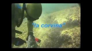 "Pillole di Pesca in Apnea:  ""La Corvina"" Tecniche di pesca in apnea."