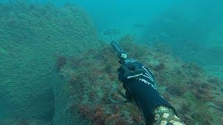Подводная охота Осенний горбыль