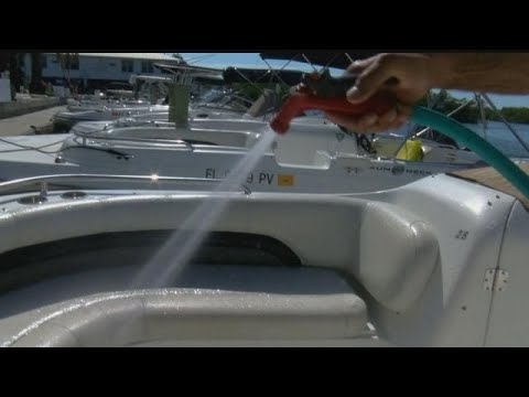 Boaters swarmed by love bugs near Lovers Key State Park