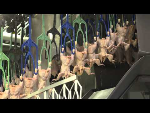 an-inside-look-at-u.s.-poultry-processing