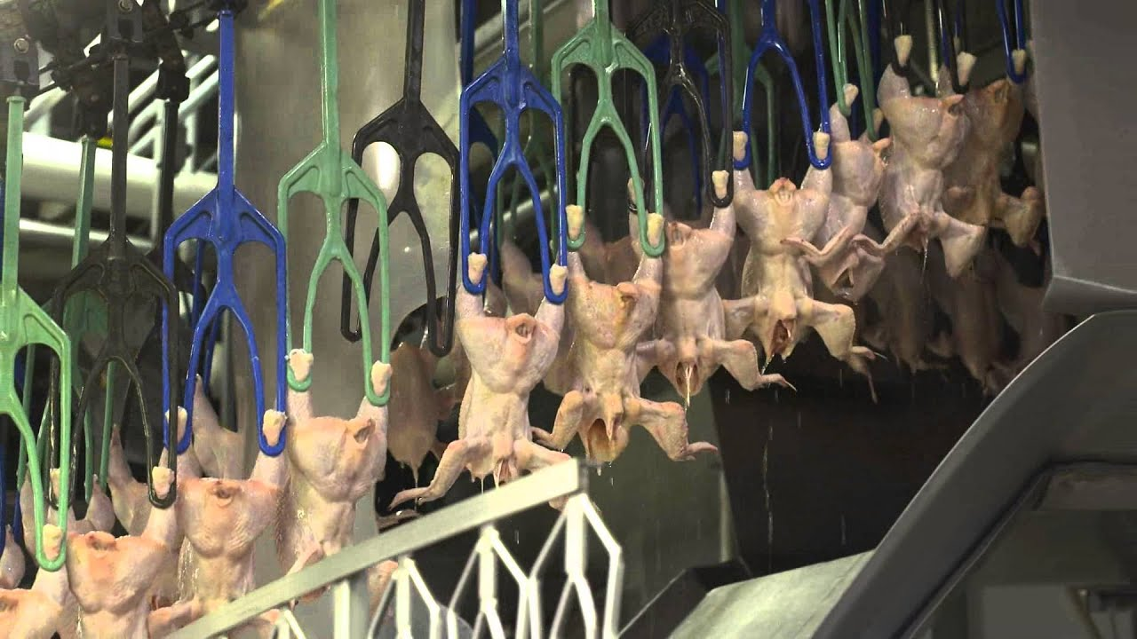 An Inside Look at U.S. Poultry Processing - YouTube