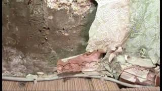 видео Грибы в челябинске цена