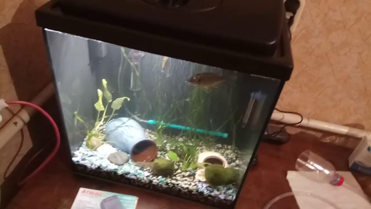 Как правильно поставить в аквариум компрессор фото помощью одежды